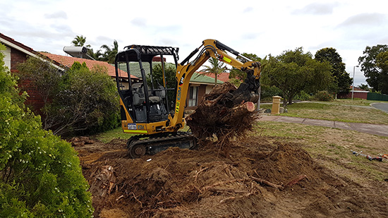 A CAT mini excavator uprooting a tree in Western Australia.